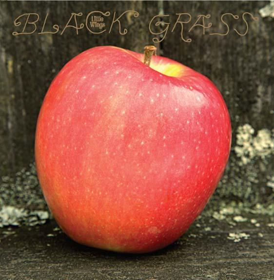 Black grass diskoaren azala